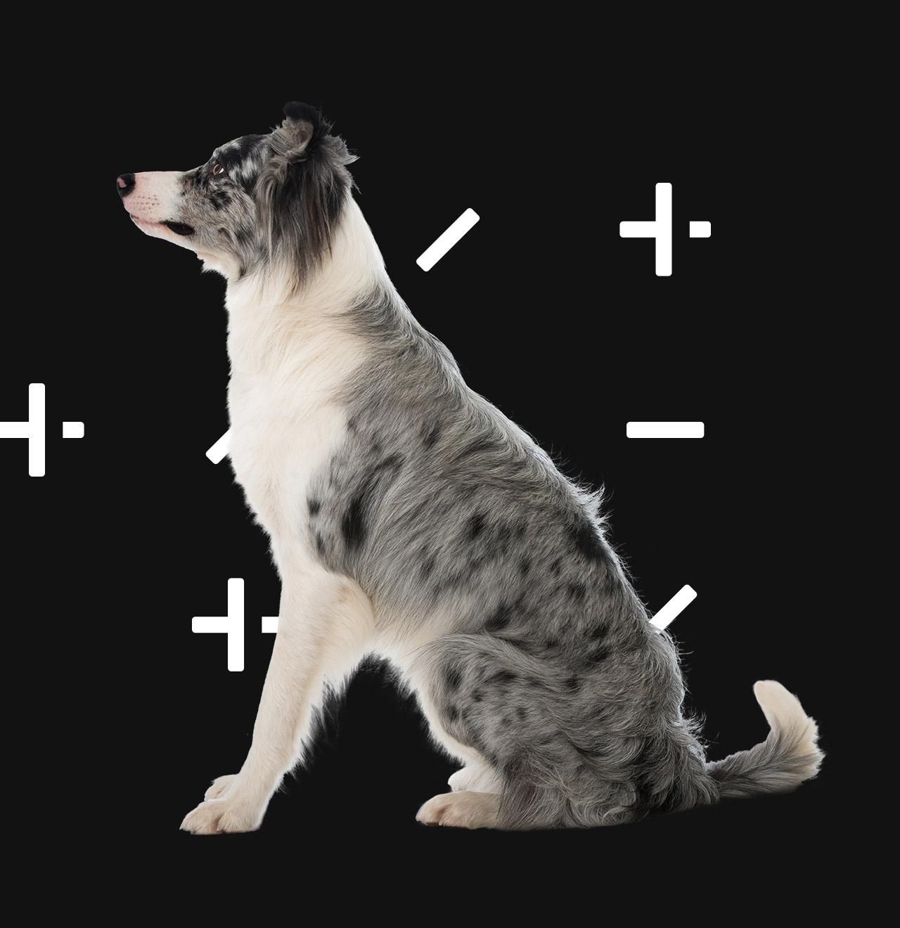 Ma gestion vétérinaire - CDMV
